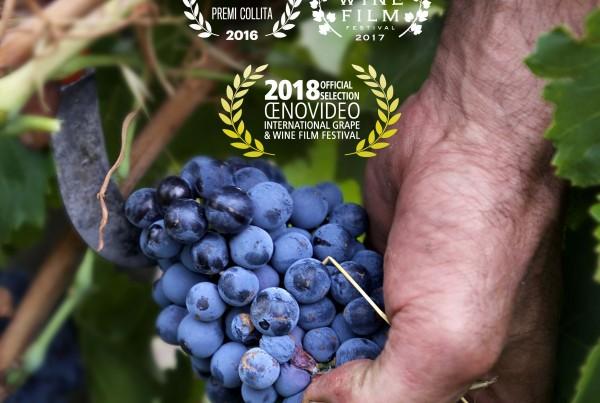 Póster de Fermentación Espontánea con una mano de un viticultor cortando uva de una cepa.