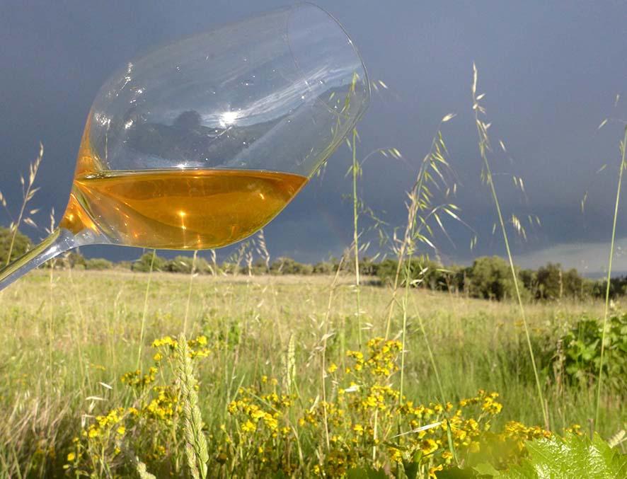 Orange wine